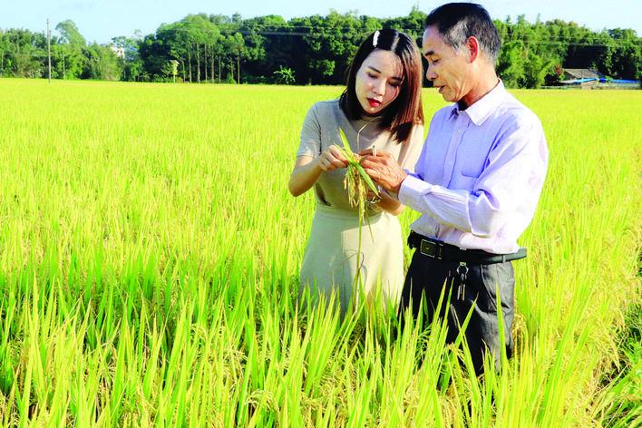 从祖塘农田起步的大米创业者邹颖(左)。